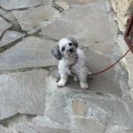 Canine meditation at Agapia monastery
